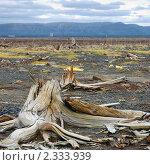 Купить «Корень сухой», фото № 2333939, снято 11 августа 2005 г. (c) Егорова Елена / Фотобанк Лори