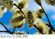 Весна. Стоковое фото, фотограф Вячеслав Фасхутдинов / Фотобанк Лори