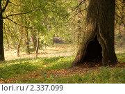 Старый дуб. Стоковое фото, фотограф Мухина Татьяна / Фотобанк Лори