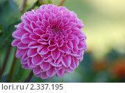 Цветок. Стоковое фото, фотограф Мухина Татьяна / Фотобанк Лори