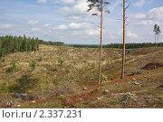 Купить «Вырубленный лес», фото № 2337231, снято 3 сентября 2008 г. (c) Икан Леонид / Фотобанк Лори