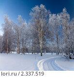 Купить «След от снегохода в березовой роще в морозный день», фото № 2337519, снято 23 января 2011 г. (c) Владимир Мельников / Фотобанк Лори