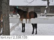 Купить «Лошадка в леваде на Московском ипподроме», эксклюзивное фото № 2338135, снято 11 февраля 2011 г. (c) lana1501 / Фотобанк Лори