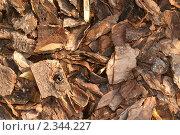 Кора сосны. Стоковое фото, фотограф Титова Елена / Фотобанк Лори
