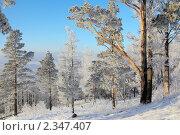 Зимний лес , иней. Стоковое фото, фотограф Виталий Горелов / Фотобанк Лори
