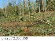 Купить «Все что осталось от лесного массива», фото № 2350359, снято 16 февраля 2011 г. (c) Татьяна Кахилл / Фотобанк Лори