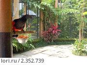 Купить «Грифовый попугай (Бали Парк птиц)», фото № 2352739, снято 18 февраля 2011 г. (c) Юлия Севастьянова / Фотобанк Лори