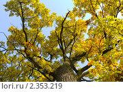 Купить «Дуб осенью», фото № 2353219, снято 16 сентября 2007 г. (c) Алексей Ухов / Фотобанк Лори
