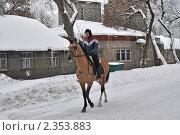 Купить «Тренировка лошади на Московском ипподроме», эксклюзивное фото № 2353883, снято 11 февраля 2011 г. (c) lana1501 / Фотобанк Лори
