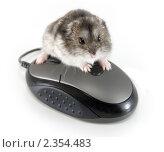 Купить «Моя мышка!», фото № 2354483, снято 28 апреля 2010 г. (c) Светлана Кузнецова / Фотобанк Лори