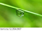 Купить «Капля дождя крупным планом», фото № 2354907, снято 30 июля 2010 г. (c) Икан Леонид / Фотобанк Лори