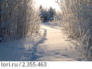 Зимняя тропа. Стоковое фото, фотограф Сергей Салдаев / Фотобанк Лори