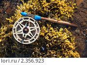 Купить «Сломанное удилище на водорослях Белого моря во время отлива», фото № 2356923, снято 7 июля 2010 г. (c) Михаил Иванов / Фотобанк Лори