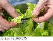 Купить «Приготовление салата», фото № 2360375, снято 18 апреля 2008 г. (c) Тарханов Николай Алексеевич / Фотобанк Лори