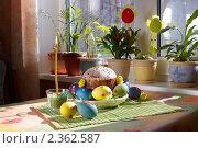 Купить «Пасхальный кулич и яйца», фото № 2362587, снято 19 апреля 2009 г. (c) Ольга Красавина / Фотобанк Лори