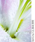 Купить «Фрагмент розовой лилии», фото № 2364999, снято 30 марта 2010 г. (c) Татьяна Макотра / Фотобанк Лори