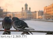 Купить «Городские голуби на набережной канала Грибоедова», эксклюзивное фото № 2369771, снято 25 февраля 2011 г. (c) Александр Алексеев / Фотобанк Лори