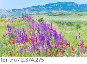 Купить «Летний горный луг», фото № 2374275, снято 4 июня 2010 г. (c) Юрий Брыкайло / Фотобанк Лори