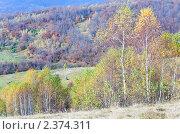 Купить «Осенний горный лес», фото № 2374311, снято 28 октября 2010 г. (c) Юрий Брыкайло / Фотобанк Лори
