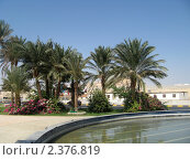 Купить «Египет, Хургада. Пальмы в парке у фонтана.», фото № 2376819, снято 8 октября 2010 г. (c) Равиль Шангараев / Фотобанк Лори
