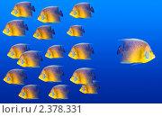 Косяк рыб на синем фоне, одна рыбка плывет в другую сторону. Стоковое фото, фотограф Дмитрий Рухленко / Фотобанк Лори