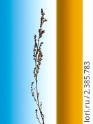 Рост. Стоковое фото, фотограф Иван Трошин / Фотобанк Лори