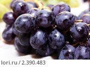 Темный виноград. Стоковое фото, фотограф Наталья Иванова / Фотобанк Лори