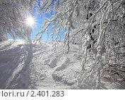 Зимний пейзаж. Стоковое фото, фотограф Кирилл Греков / Фотобанк Лори