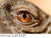 Купить «Глаз дракона», эксклюзивное фото № 2414527, снято 16 марта 2011 г. (c) Красилов Игорь / Фотобанк Лори