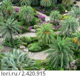 Пальмы в парке Нунг Нуч /Nong Nooch/ ,Паттая,Тайланд (2008 год). Стоковое фото, фотограф Баранов Александр / Фотобанк Лори