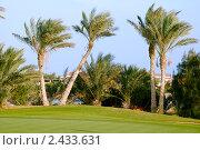 Купить «Пейзаж с пальмами», фото № 2433631, снято 31 декабря 2010 г. (c) Беляева Елена / Фотобанк Лори