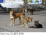 Стая бездомных собак на улицах Москвы. Стоковое фото, фотограф lana1501 / Фотобанк Лори