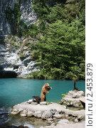 Купить «Абхазия. Голубое озеро», фото № 2453879, снято 20 августа 2007 г. (c) Gagara / Фотобанк Лори