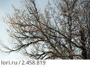 Светящиеся деревья на фоне неба (2011 год). Стоковое фото, фотограф Elena Monakhova / Фотобанк Лори