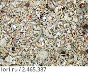 Кораллы. Стоковое фото, фотограф Баранов Александр / Фотобанк Лори