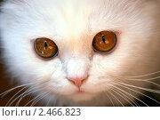 Пушистый кот. Стоковое фото, фотограф Маргарита Мухина / Фотобанк Лори