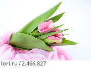 Букет тюльпанов. Стоковое фото, фотограф Ольга Стрейкмане / Фотобанк Лори