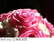 Розовые розы на чёрном фоне. Стоковое фото, фотограф Маргарита Мухина / Фотобанк Лори