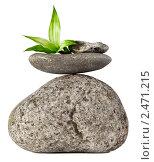 Купить «Камни и зеленые листья», фото № 2471215, снято 17 июля 2018 г. (c) Marina Appel / Фотобанк Лори
