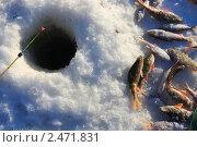 Купить «Черная лунка и мерзлая рыба», эксклюзивное фото № 2471831, снято 15 января 2011 г. (c) Анатолий Матвейчук / Фотобанк Лори
