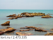 Купить «Чайки на берегу», фото № 2473335, снято 15 августа 2018 г. (c) Александр Малышев / Фотобанк Лори