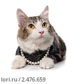 Кошка в одежде и бусах. Стоковое фото, фотограф ingret (Ира Бачинская) / Фотобанк Лори