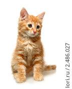 Котенок на белом фоне. Стоковое фото, фотограф ingret (Ира Бачинская) / Фотобанк Лори