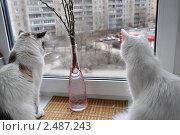 В ожидании весны. Стоковое фото, фотограф Серкова Татьяна / Фотобанк Лори