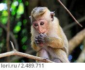 Детеныш обезьяны. Стоковое фото, фотограф Морозова Татьяна / Фотобанк Лори