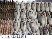 Купить «Москва, Прилавок со свежей рыбой на Черёмушкинском рынке», эксклюзивное фото № 2492911, снято 11 декабря 2010 г. (c) Дмитрий Неумоин / Фотобанк Лори