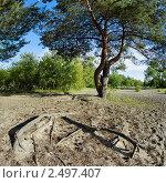 Купить «Сосна и корни», фото № 2497407, снято 6 декабря 2019 г. (c) Михаил Марковский / Фотобанк Лори