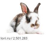 Купить «Крольчонок», фото № 2501283, снято 3 августа 2020 г. (c) Дмитрий Калиновский / Фотобанк Лори