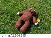 Teddy на лугу (2011 год). Редакционное фото, фотограф Elena Strigoun / Фотобанк Лори