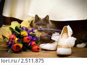Сборы невесты. Стоковое фото, фотограф Виктория Дементьева / Фотобанк Лори